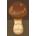 Elegant Mushroom