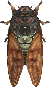 Animal Crossing: New Horizons Brown Cicada Bug