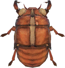 Animal Crossing: New Horizons Cicada Shell Bug