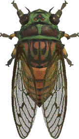 Animal Crossing: New Horizons Evening Cicada Bug