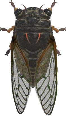 Animal Crossing: New Horizons Giant Cicada Bug