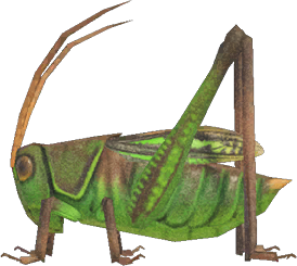 Animal Crossing: New Horizons Grasshopper Bug