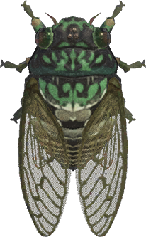 Animal Crossing: New Horizons Robust Cicada Bug