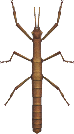 Animal Crossing: New Horizons Walking Stick Bug