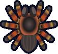 Animal Crossing: New Horizons Tarantula Bug