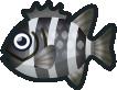 Animal Crossing: New Horizons Barred Knifejaw Fish