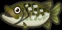 Animal Crossing: New Horizons Pike Fish