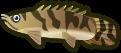 Animal Crossing: New Horizons Saddled Bichir Fish