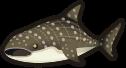 Animal Crossing: New Horizons Whale Shark Fish